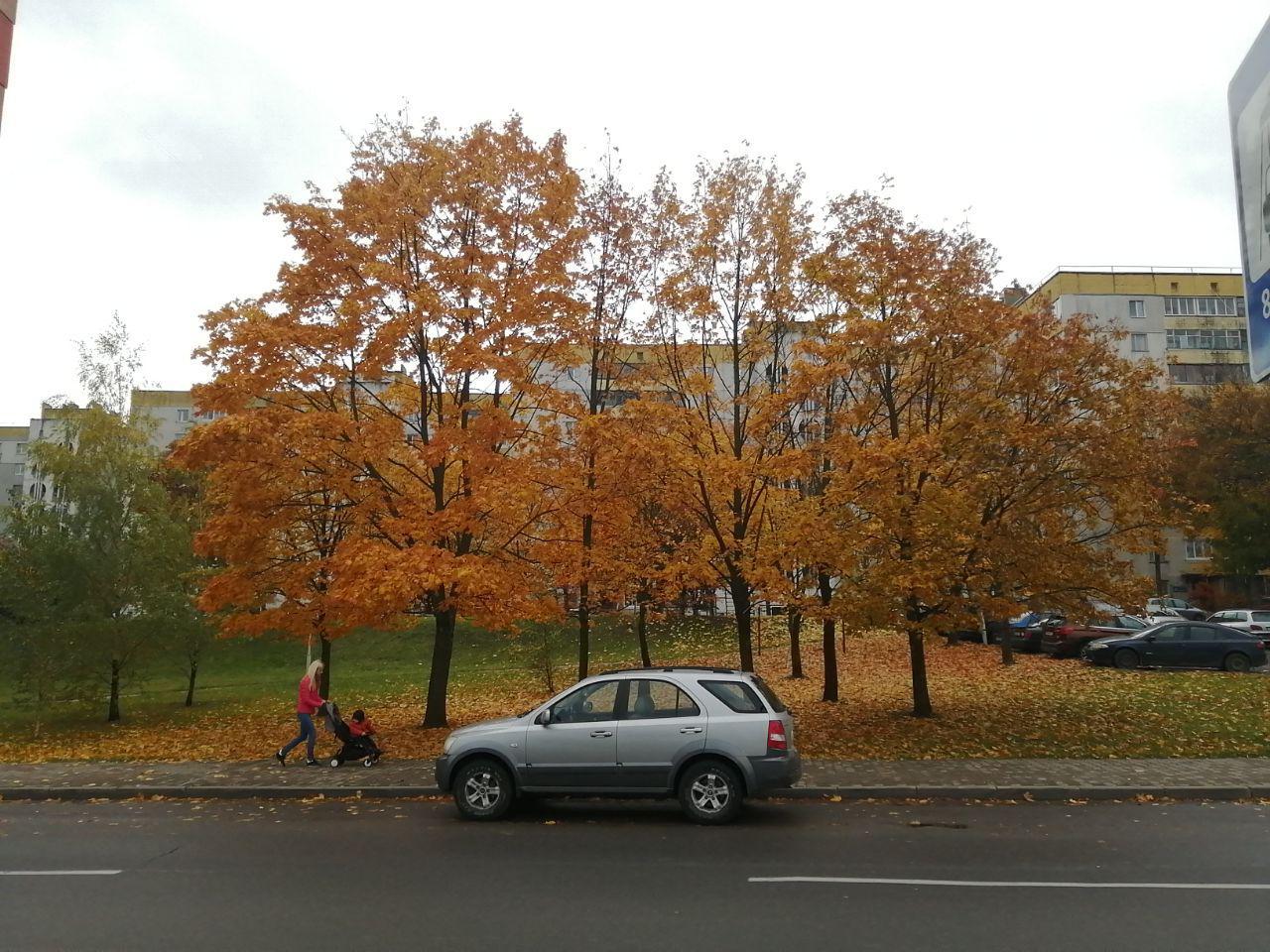 Фото на улице пасмурная погода на Huawei p30 lite основная камера