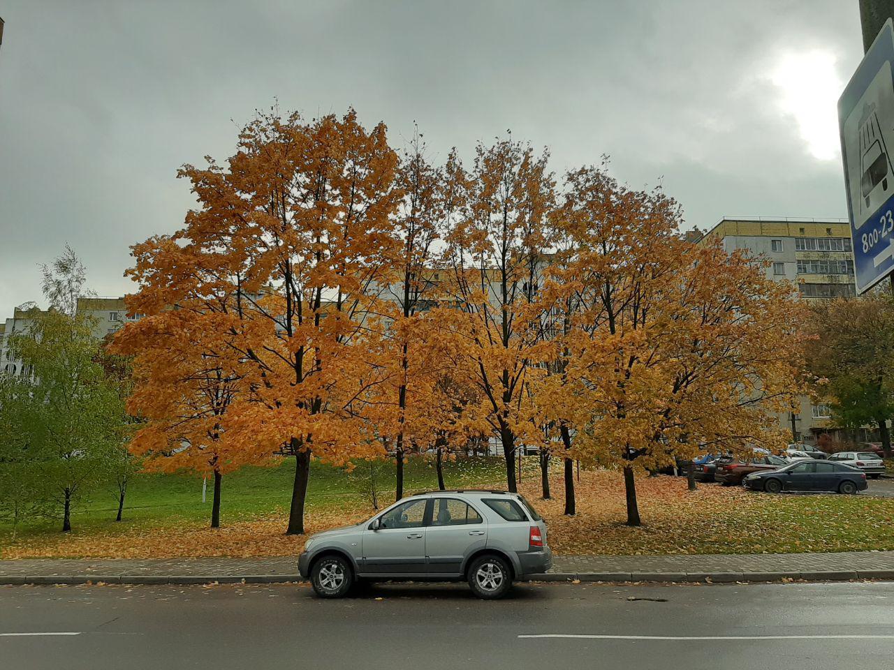 Фото на улице пасмурная погода на Samsung Galaxy a50 основная камера